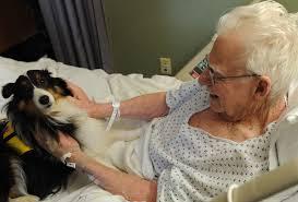 A terápiás állatok jelentősége vitathatatlan