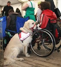 A terápiás állatok sokat segíthetnek