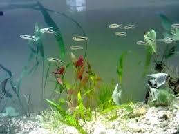 Juwel akvárium