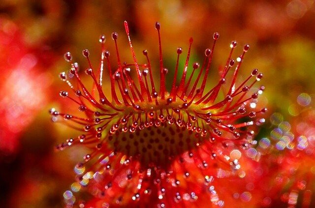 potencianövelő gyógynövények